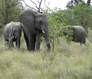 My African Safari...May 2010