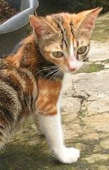 3 Kitten baru di Adopsi