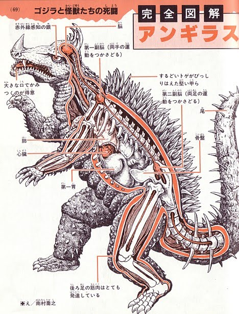 http://4.bp.blogspot.com/_JGgzOkYhIb0/TCYCy78I4fI/AAAAAAAAFlM/4Qbz9fu4yXc/s1600/anatomy_anguiras.jpg