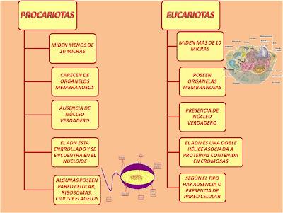 celula procariota y eucariota. las células procariotas y