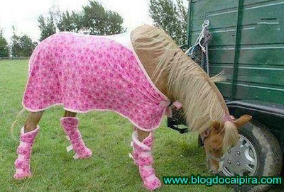 fotos. cavalo do richarlyson