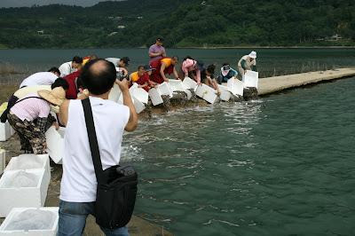 水生物放生活動。照片提供:台灣動物社會研究會