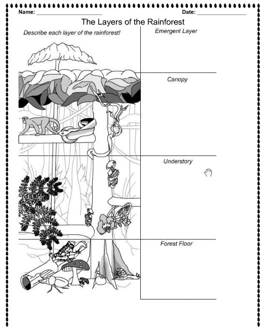 Layers Of The Rainforest Worksheets For Kids Rainforest Layers Coloring Page