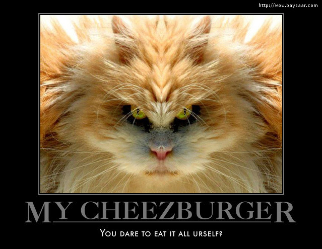 My cheezburger You ate it