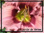 Le Jardin de Vérone