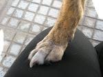 Amiguinha de 4 patas