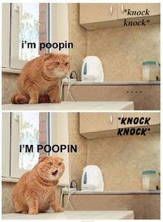 knock knock i am pooping, cat pooping