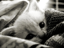I ♥~Cats