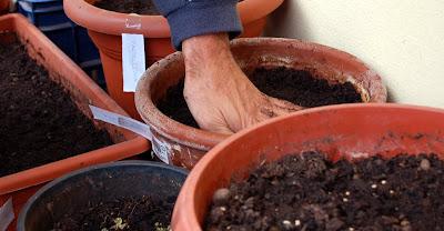 L 39 orto sul balcone e l 39 orto nel campo nuova semina for Semina basilico in vaso
