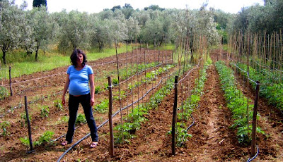 L 39 orto sul balcone e l 39 orto nel campo aggiornamento dal for Coltivare meloni