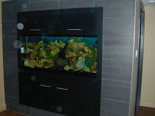 Creative fish tank design