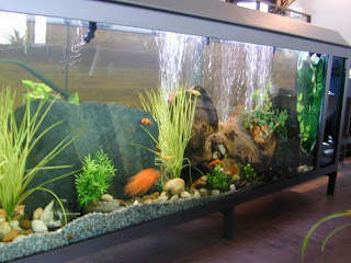 aquarium fish tank design