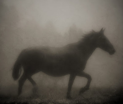 silhouette of horse in heavy fog
