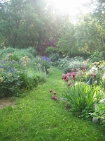 garden allowed to grow wild with plants and flowers taking over the space