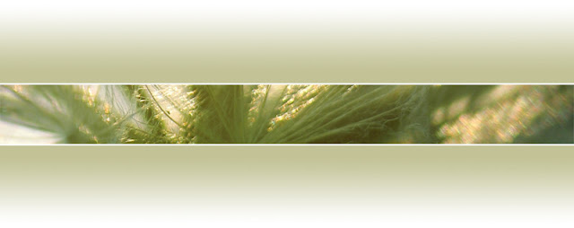 horizontal abstracted pictire of strip of ornamental grasses