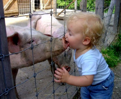toddler kissing pig snout