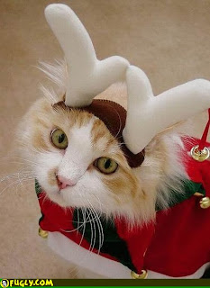 cat wearing reindeer antlers