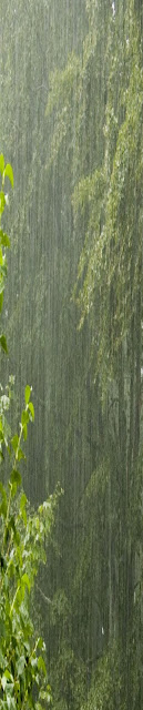 heavy rain falling in forest