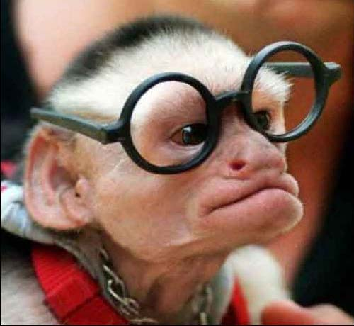 Funny Intelligent Monkey : I think this guy really knows