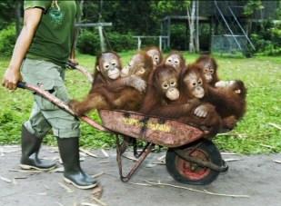 Foto foto monyet lucu