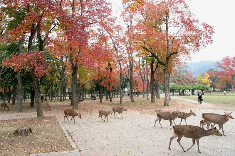 曇り空: Japaese Geography Project - Nara(奈良)