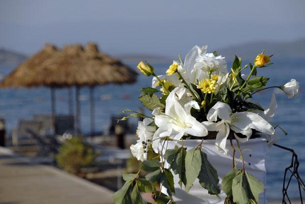 Wedding Bouquets Lakeland Fl : Wedding flowers lakeland florida