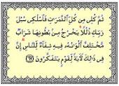 Madu Menurut Al-qur'an