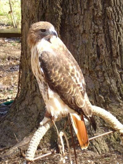 Divine Sparks Hawk Symbolism