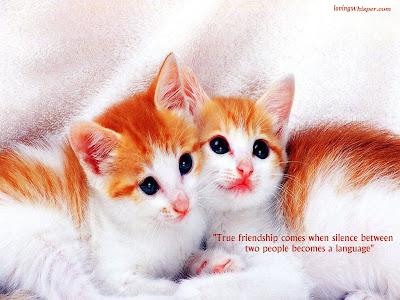 friendship wallpaper. Wonderful Friendship Wallpaper