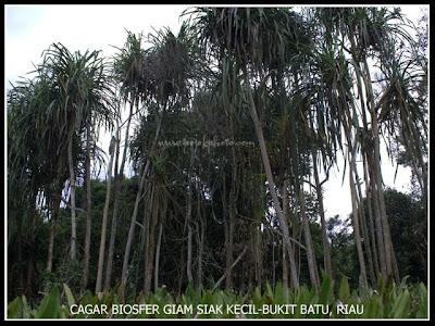 Cagar Biosfer Giam Siak Kecil Bukit Batu Riau Indonesia