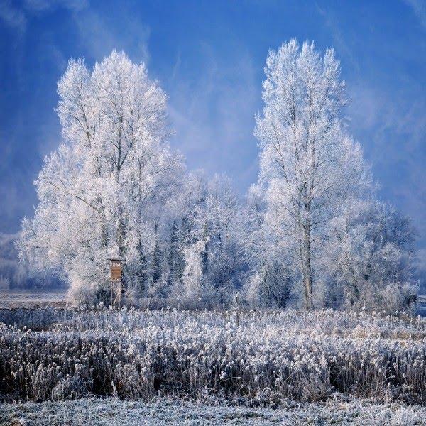 Белая береза Под моим окном Принакрылась снегом,Точно серебром.На пушистых