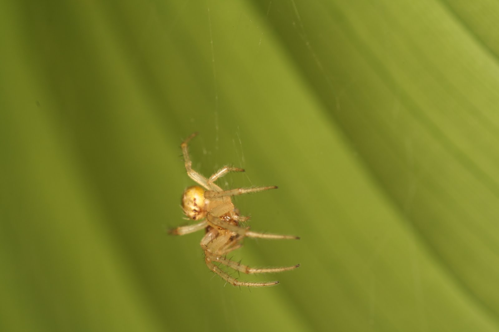 Light Brown Spider In Clearwater Sanctuary