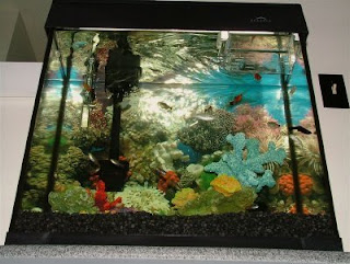 Fresh water aquarium fish buying your first freshwater for First fish tank