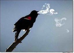 حتى الطيور.. تبي الدفا ..