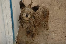 А это наша собака, зовут Рекс....