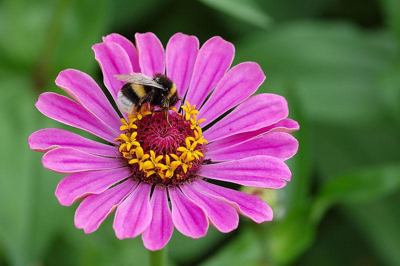 Ciencia con espiral de lim n cuando las flores con otro - Clase de flores y sus nombres ...