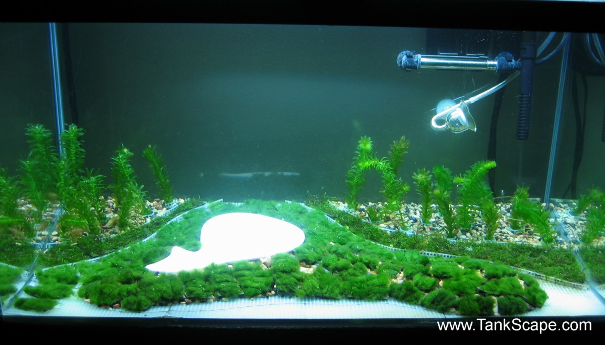 Tank Scape My Golf Course Planted Tank Mole In One