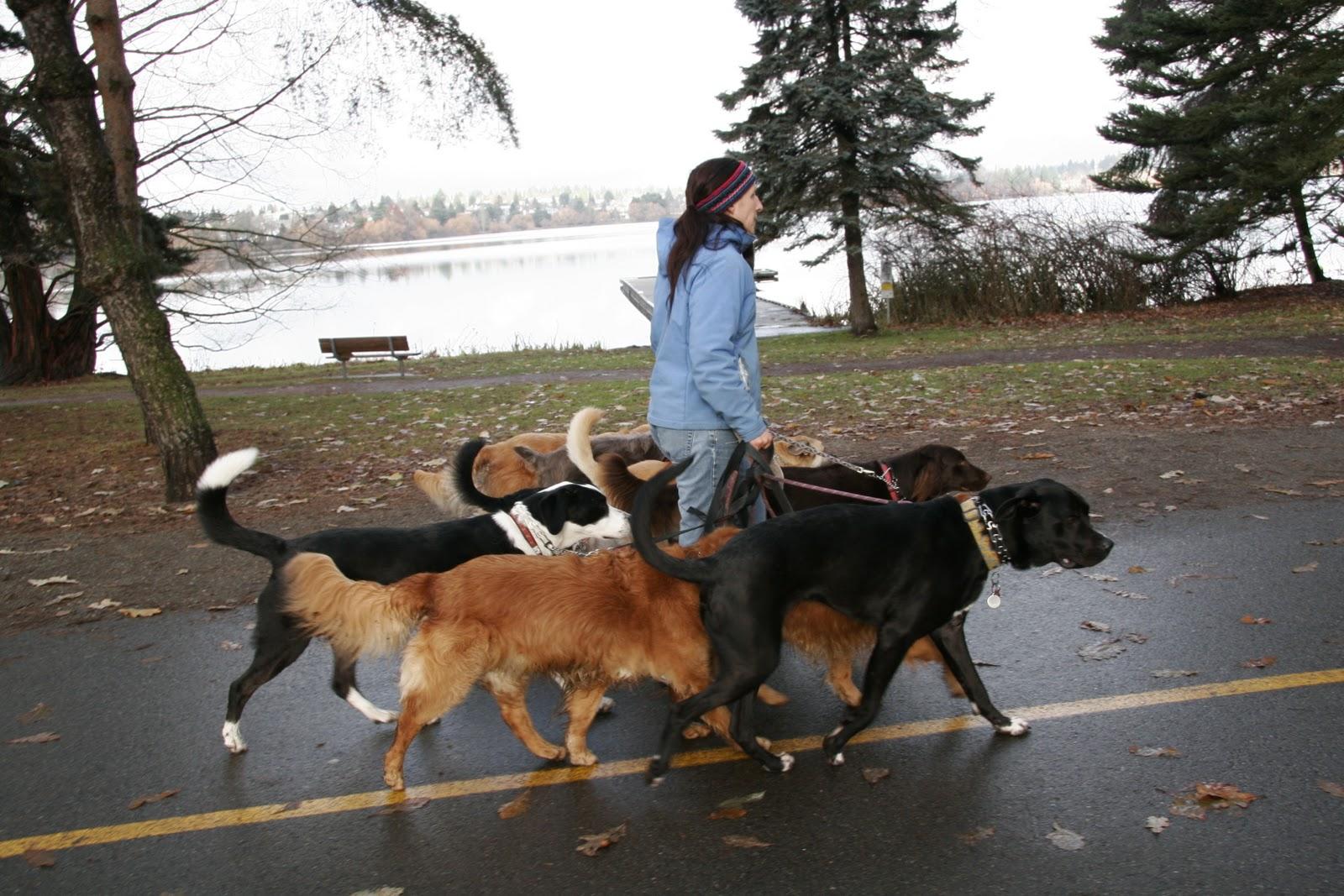 Best Dog Walks North Seattle