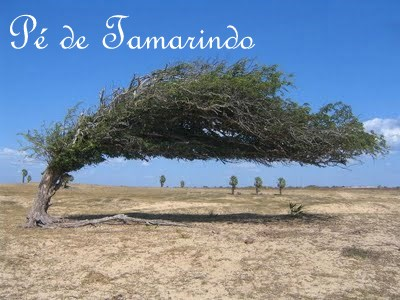 Pé de Tamarindo