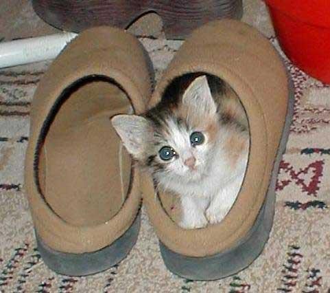 Книги и Журналы = Смешные кошки (33 фотки)