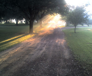 Morning Driveway