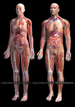 Gambar Anatomy tubuh manusia