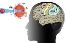 kepala manusia dan mata