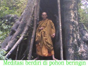 Gambar lagi Meditasi berdiri di pohon besar