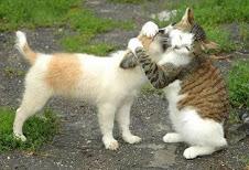 """""""Amor animal"""""""