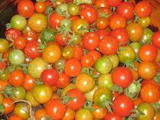 Tomatito criollo