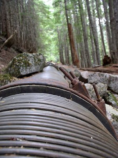 Wooden Drainage Pipe, Carter Falls Trail, Mt. Rainier