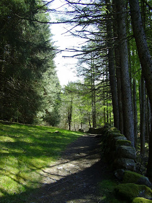 woodland walk at glentrool forest