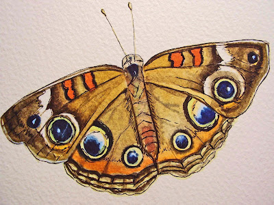a watercolour painting of a buckeye butterfly by ruthie