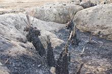 Todos los veranos arden padrones, tramos de ribera, bosquetes en nuestro TM.